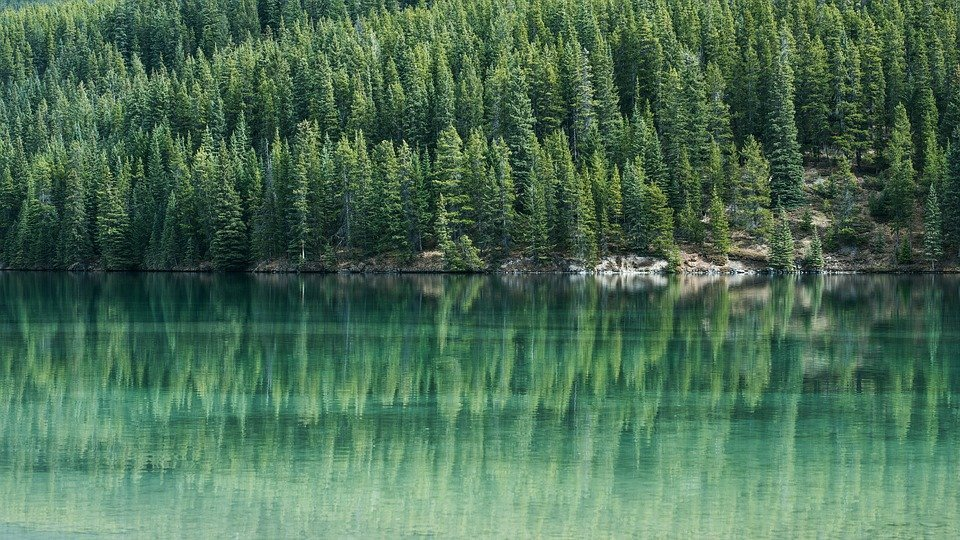 What is Evergreen Content & Why Do You Need it on Your Site?